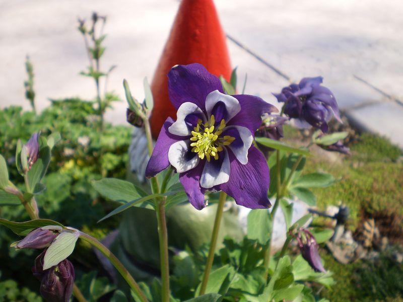 Spring garden 136 (8)