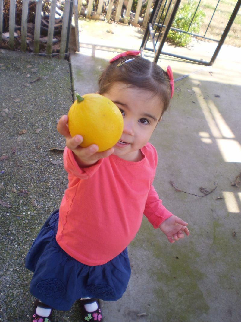 Blue Belly and lemons 030 (13)